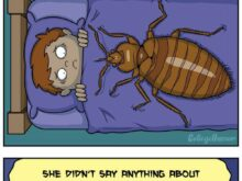Bed Bugs Attack Cats
